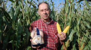 Här odlas majsen till Bjärekycklingarna